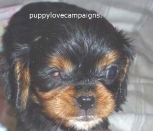 Photo courtesy of Puppy Love Campaigns