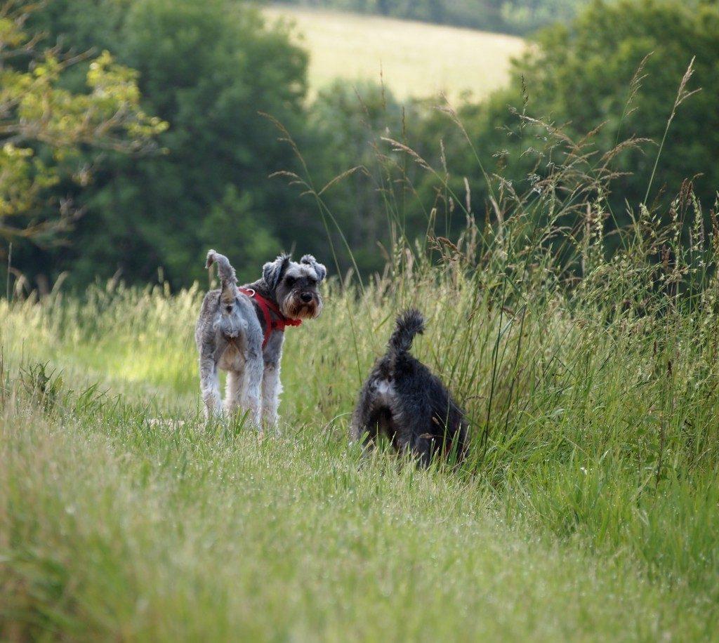 Renae and Albert Claude enjoying their walks
